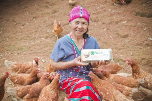 ไข่ไก่ออแกนิค ผลิตภัณฑ์ที่เทสโก้ส่งเสริมชาวเขาดอยวาวี