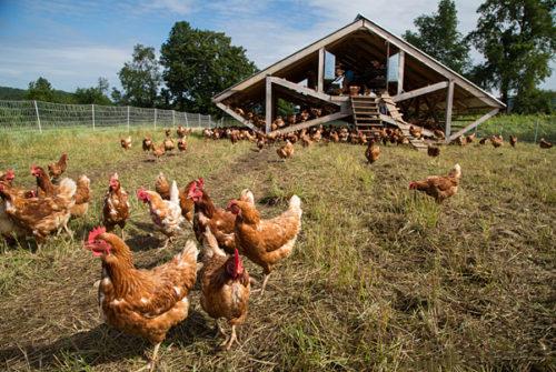 การเลี้ยงไก่ให้สูขภาพดี