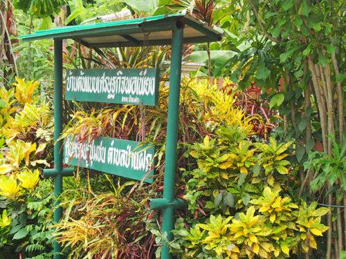 ด้านหน้าบริเวณบ้านต้นแบบเศรษฐกิจพอเพียง ศูนย์เรียนรู้ชุมชนตำบลป่าแฝก