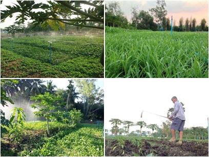 ทำนาในพื้นที่ 80 กว่าไร่ จัดสรรพื้นที่ออกเป็น 6 แปลง ปลูกพืชหมุนเวียนตลอดปี