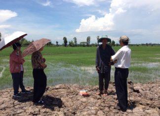 ไปดูข้าวเวียดนาม...ทำไมถึงได้ผลผลิตสูงกว่าข้าวไทย?