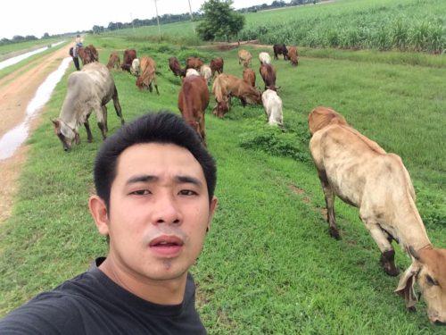 ภารกิจของเด็กเลี้ยงวัว