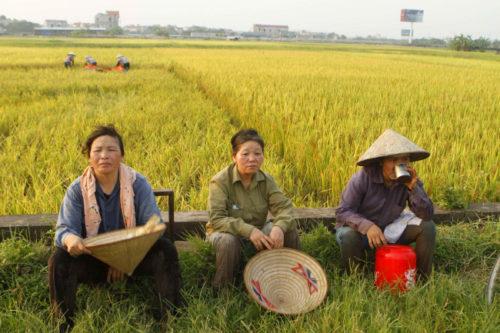 ชาวนาเวียดนาม (ขอบคุณภาพนี้-ไทย พีบีเอส)