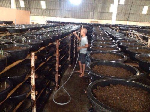 D farm ฟาร์มไส้เดือน แห่งอ.เขาย้อย จ.เพชรบุรี