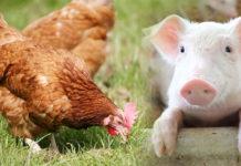 เลี้ยงสัตว์อย่างไร ให้สุขภาพดี มีความสุข ไม่มีกลิ่น ที่นี่มีคำตอบ