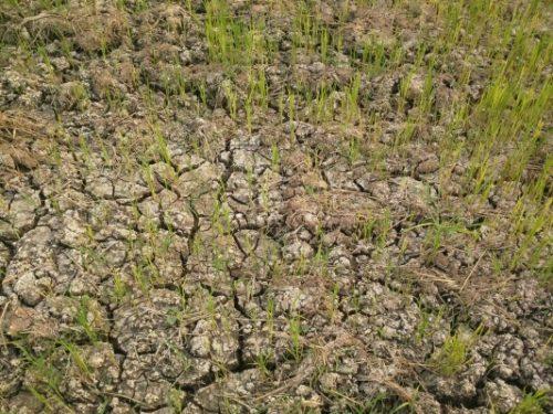 การจัดการทรัพยากรดิน น้ำ ป่าไม้ สู่ความยั่งยืนในการใช้ที่ดิน
