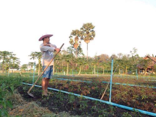 อำพล นาดี จบปริญญาตรี ด้านเทคโนโลยีเกษตร จากมหาวิทยาลัยชื่อดังมาพัฒนาบ้านเกิด