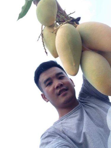 """""""อำพล นาดี"""" คนหนุ่มรุ่นใหม่หัวใจเกษตร โชว์ผลผลิตมะม่วงในสวนด้วยความภูมิใจ"""