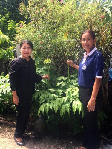(จากซ้าย) นางสาวศรีวรรณ จิตจินดา ประธานศูนย์อนุรักษ์เท้ายายม่อม (ขวามือ) นางสาวปิยากร นวลแก้ว หัวหน้า สกจ.ชลบุรี