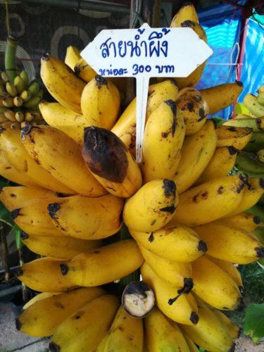 กล้วยพันธุ์สายน้ำผึ้ง