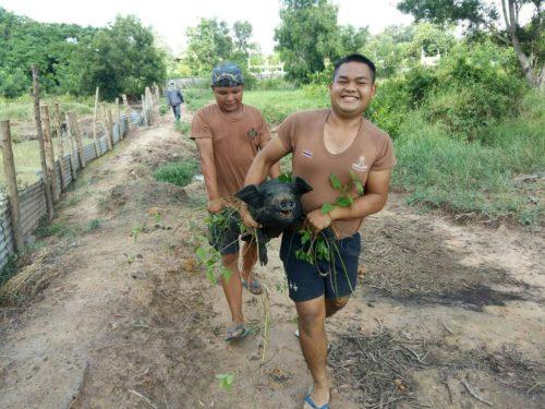 ทหารอากาศ ขณะเลี้ยงหมูป่า มัทั้งรอยยิ้ม ทั้งความสุข