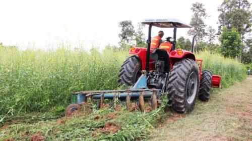 นายสำราญ สาราบรรณ์ รองอธิบดีกรมส่งเสริมการเกษตร สาธิตการไถกลบปอเทือง เพื่อเตรียมปลูกอ้อย