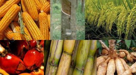 สินค้าทางการเกษตรราคาตกต่ำ ไม่มีคนซื้อ