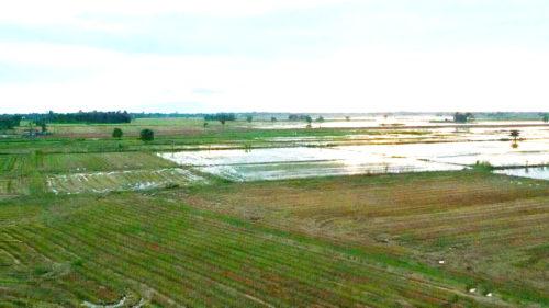 พื้นที่ลุ่มต่ำเหนือจังหวัดนครสวรรค์ ซึ่งเป็นพื้นที่ทุ่งนาที่มีน้ำท่วมเป็นประจำเกือบทุกปี