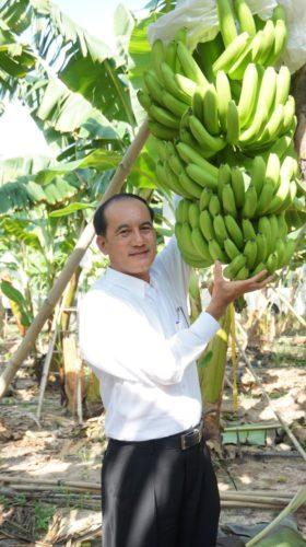 คุณขุนศรี ทองย้อย ผู้บริหารเครือซีพี โชว์ผลผลิตจากกล้วยหอมเขียวคาเวนดิช