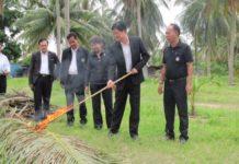 หนอนหัวดำมะพร้าวบุกชลบุรี...กรมส่งเสริมฯงัดทุกวิธี-หวังเกษตรกรร่วมมือกัน