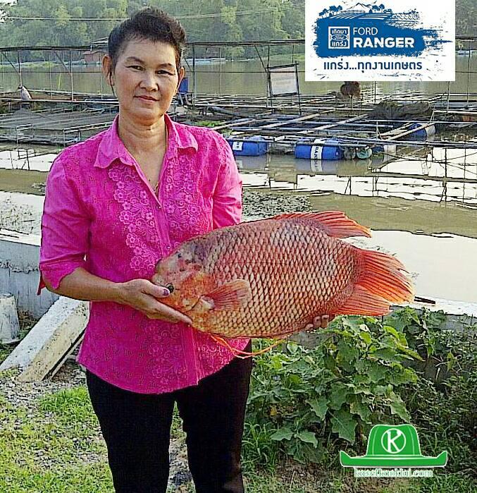 """ปลาแรด คือ """"ปลาทองคำ"""" ของเกษตรกรลุ่มน้ำสะแกกรัง จ.อุทัยธานี (มีคลิป)"""