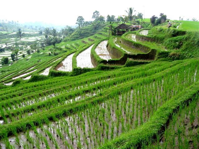 เกษตรฯ จับมือกองทัพบก ลงนามการใช้แผนที่หวังใช้ประโยชน์ในการบรรเทาสาธารณภัย