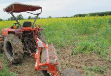 พด. เร่งขับเคลื่อนโครงการปลูกพืชปุ๋ยสด ฤดูนาปรัง ปี 2561
