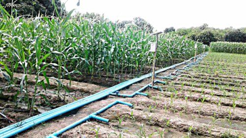 การให้น้ำแบบระบบรางที่ทำให้สามารถควบคุมการให้น้ำ และสารอาหารได้อย่างทั่วถึง