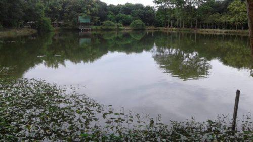 ขุดบ่อเลี้ยงปลา 2 บ่อ จำนวนแสนตัว ได้แก่ บ่อแรกจะเป็นปลาสวายและปลานิล บ่อที่สองจะเป็นกลุ่มปลาเบญจพรรณ
