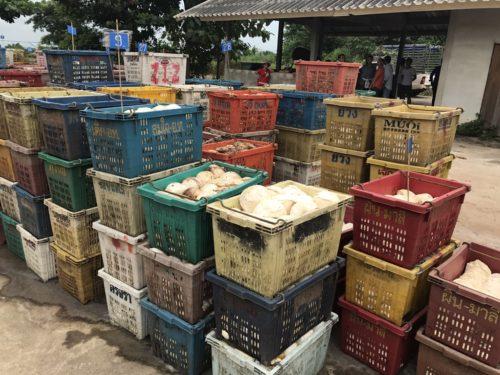 ยางก้อนถ้วยจากเกษตรกรที่ผ่านการประมูลจากผู้รับซื้อ