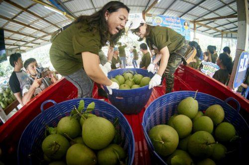 บรรทุกผลผลิตการเกษตร ด้วยกระบะขนาดใหญ่สามารถรองรับการบรรทุกได้มากและรับน้ำหนักได้สูงถึง 1.3 ตัน