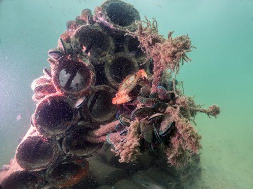 บ้านปลา(ปะการังเทียม)