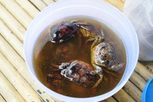 ปูดอง หรือปูแช่น้ำปลา