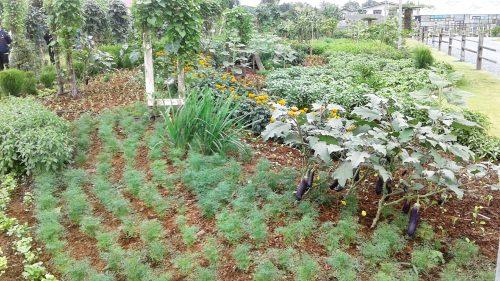 จัดนิทรรศการด้วยการโชว์สายพันธุ์ผัก และดอกไม้ที่หลากหลายของ อีสท์ เวสท์ ซีด กว่า 200 สายพันธุ์