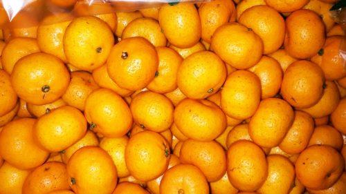 ส้มแมนดารินนำเข้าจากจีน