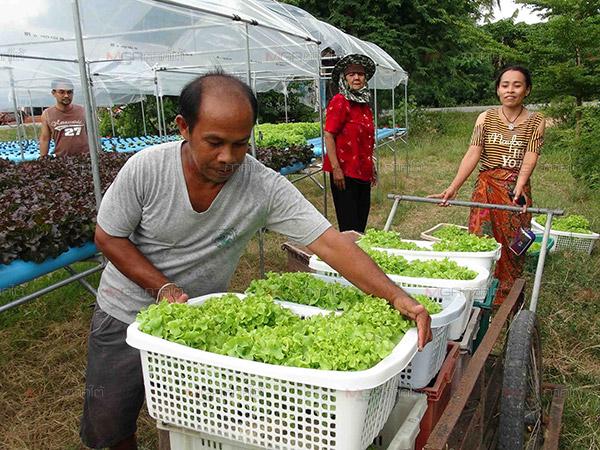 ส่งเสริมการทำงานของผู้สูงอายุ และผู้พิการในภาคเกษตร เพื่อลดการว่างงานตามฤดูกาล