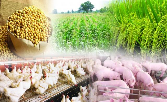 สินค้าเกษตรเข้ามามีบทบาทมากขึ้นทั้งในด้านพลังงานและอาหาร