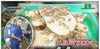 สำนักงานคณะกรรมการวิจัยแห่งชาติ ร่วมมือ ม.แม่ฟ้าหลวง จัดอบรมการเลี้ยงผึ้งนางพญา ที่จังหวัดเชียงราย