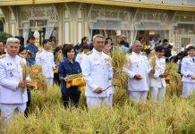 รมช.เกษตรฯ เป็นประธานร่วมเกี่ยวข้าว ณ แปลงนาเลข ๙ ภายในภูมิสถาปัตยกรรมฯ