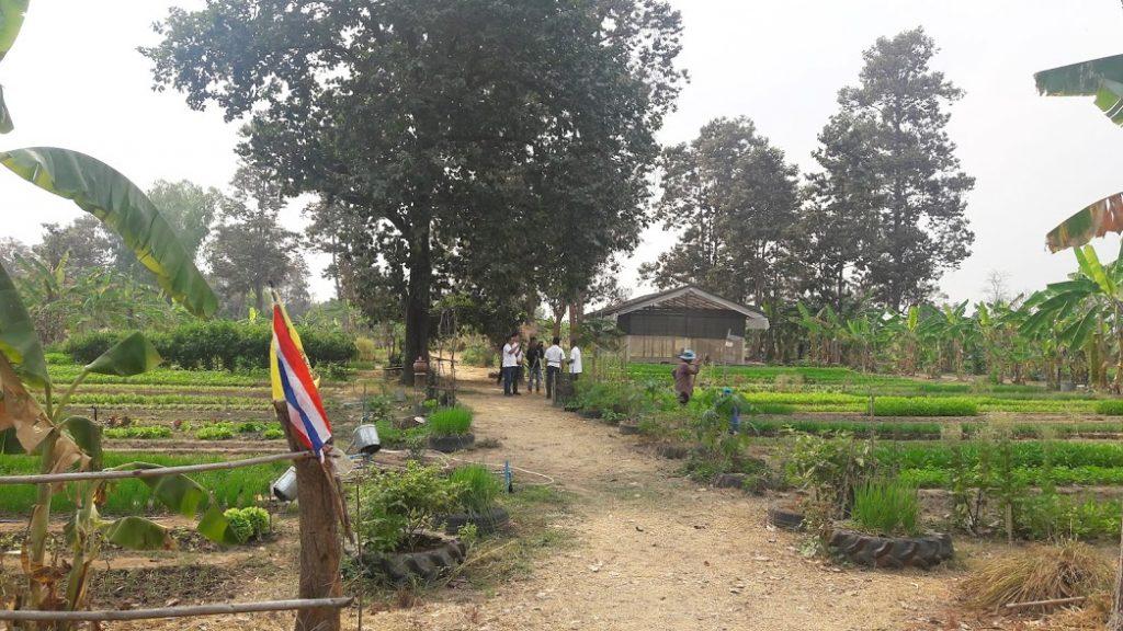 แปลงปลูกผักของชุมชน ซึ่งใช้ต้นแบบของแก้วพะเนาว์ฟาร์ม