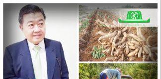 เจาะทิศทางสินค้าเกษตร ไตรมาส 1 สศก. ชี้ มันสำปะหลัง-ยางพารา ราคาดีขึ้น