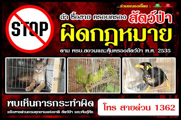 มาช่วยกันปกป้องคุ้มครองสัตว์ป่าไทย