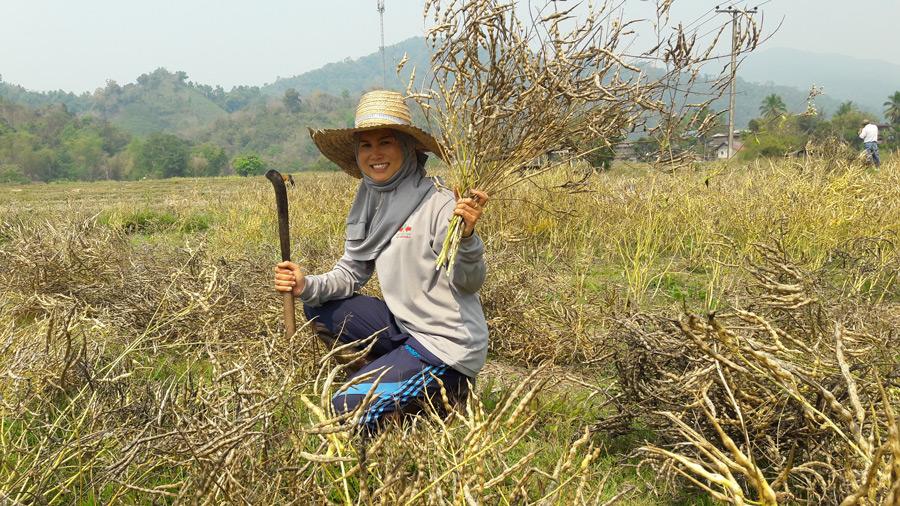 คุณพินหฤดา พิศจาร เป็นเกษตรกรอีกรายหนึ่งที่ไปได้ดีกับการปลูกผักขี้หูดขายเมล็ดพันธุ์ กิโลกรัมละ 400 บาท
