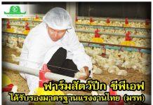 """ฟาร์มสัตว์ปีก ซีพีเอฟ """"บริษัทแรกของประเทศ"""" ได้รับรองมาตรฐานแรงงานไทย (มรท)"""