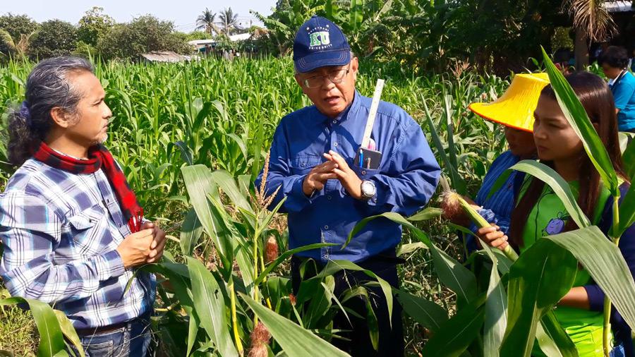 สัมภาษณ์ ดร.โชคชัย เอกทัศนาวรรณ จาก ศูนย์วิจัยข้าวโพดและข้าวฟ่างแห่งชาติ คณะเกษตร มหาวิทยาลัยเกษตรศาสตร์ มาให้ความรู้เรื่องข้าวโพดฟักอ่อน พันธุ์เกษตรศาสตร์ 3