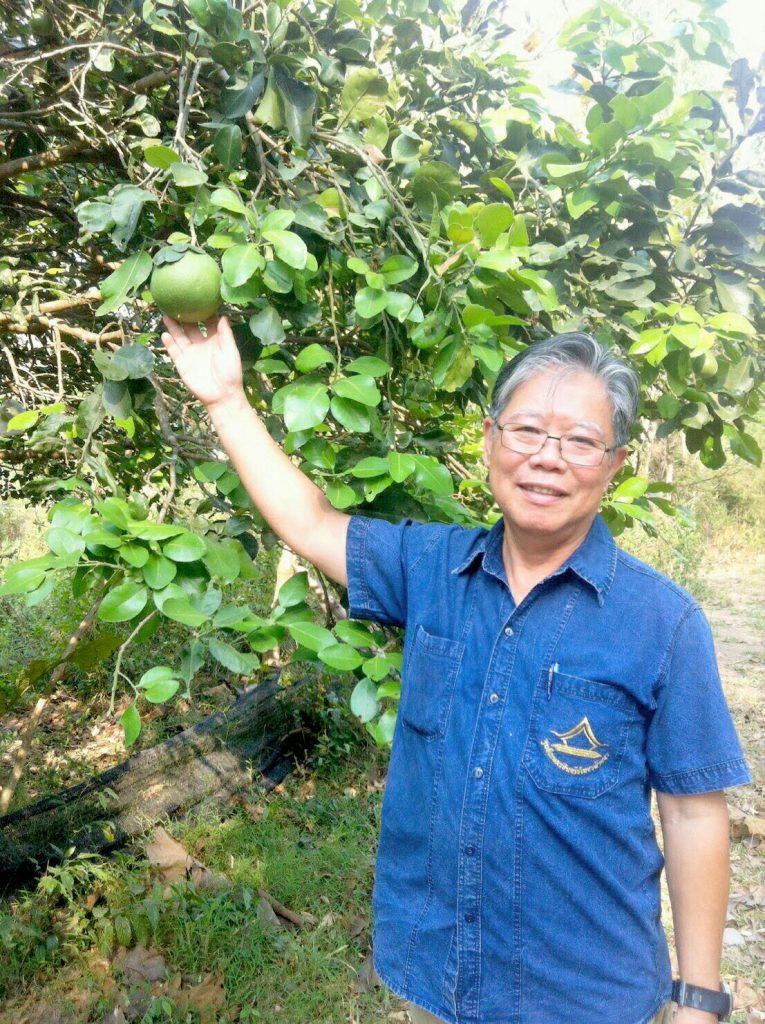 นายประพัฒน์ ปัญญาชาติรักษ์ โชว์ผลส้มโอในสวนของเกษตรกร