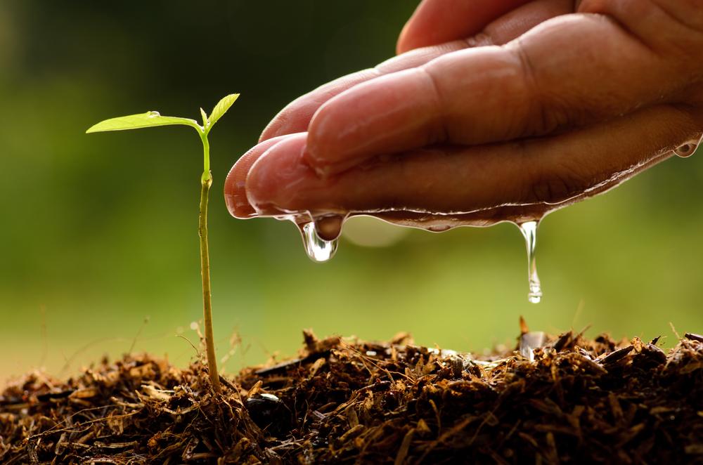 5+1 วิธีเลือกซื้อที่ดินเบื้องต้นให้เหมาะกับการทำเกษตร
