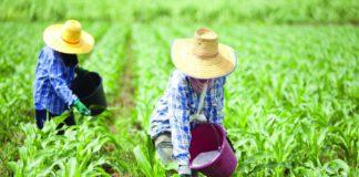 """ผ่าโจทย์หลัก """"โครงการไทยนิยม ยั่งยืน"""" กระทรวงเกษตรวางเป้าเกษตรกรได้ประโยชน์ 4.3 ล้านคน"""