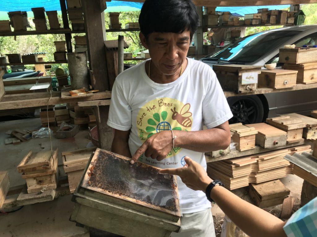 ชันโรง ผึ้งจิ๋วกามเทพ ช่วยผสมเกสรไม้ผล ลูกดกผลผลิตเพิ่ม