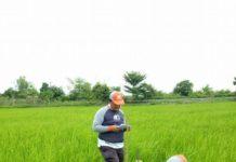 ฮั้วเฮงหลี โชว์ความสำเร็จ แปลงนาสาธิต รูปแบบ KAS-เกษตรครบวงจร