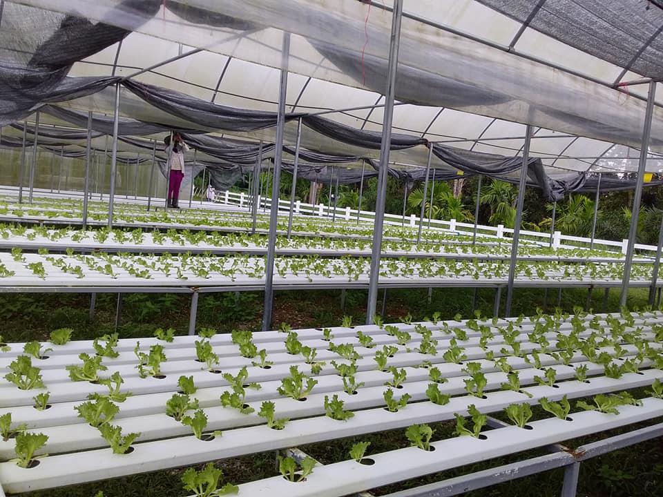 ครูก้อย-คิชฌกูฎออร์แกนิค ฟาร์ม...ปลูกผักสลัดส่งแม็คโคร 6 สาขา