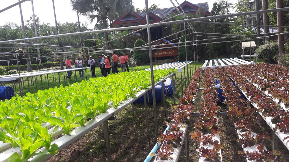 ตรงบริเวณทางเข้าสวน...มุมขวามือจะปลูกผักไฮโดรโปนิกส์กลางแจ้ง