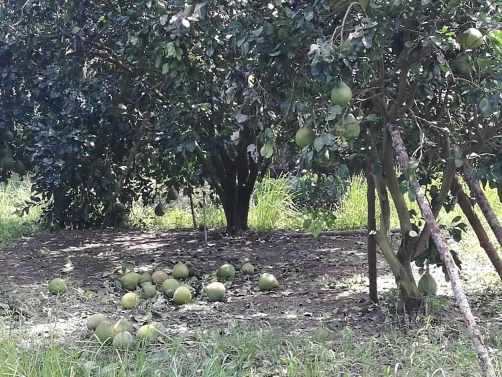 กรมส่งเสริมการเกษตร พร้อมเยียวยาเกษตรกรภาคใต้