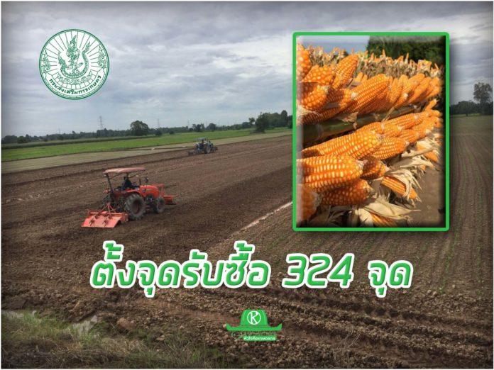 โชว์ข้าวโพดหลังนาแปลงนำร่อง เผยราคาพุ่ง 8.29 เกษตรกรยิ้มรับ